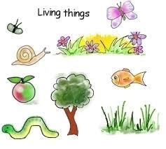 Year 3 Living things