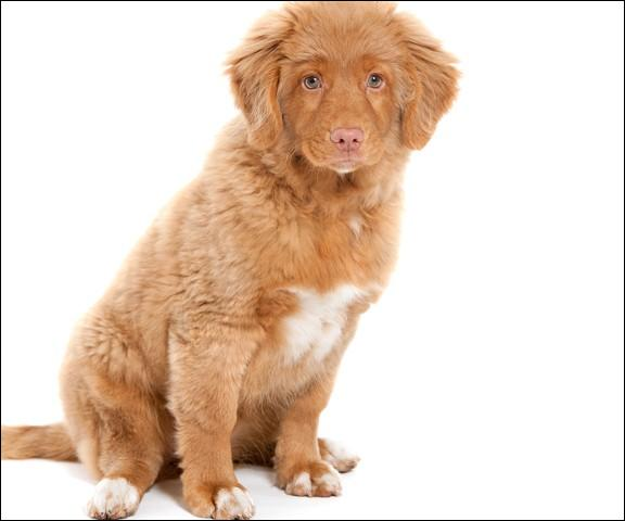 Do you know this dog breed?