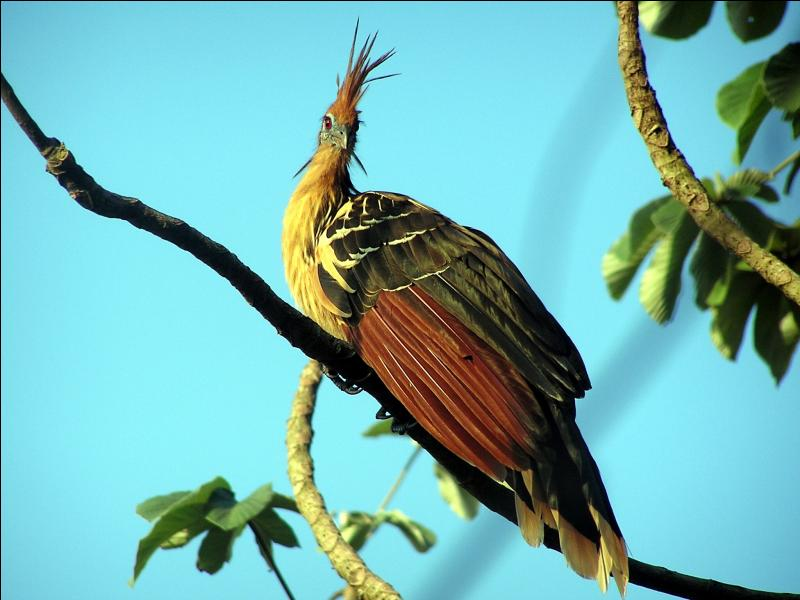 Have you ever heard of this bird?